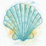 Aqua Scallop Shell